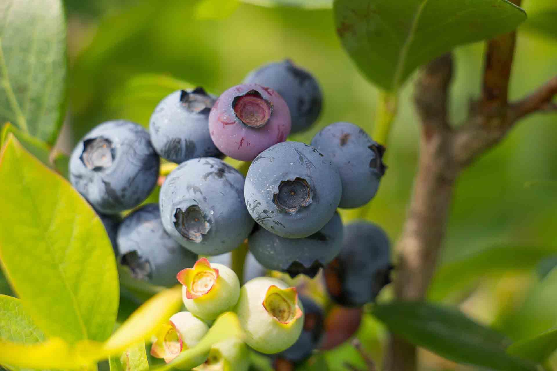 Les fruits les plus adaptés à un régime minceur